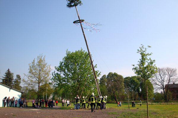 2011-Maibaum stellen-07