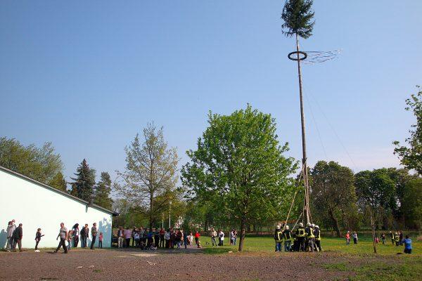 2011-Maibaum stellen-08